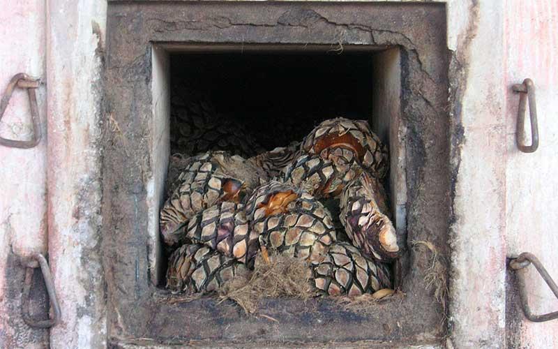 coccion-del-agave